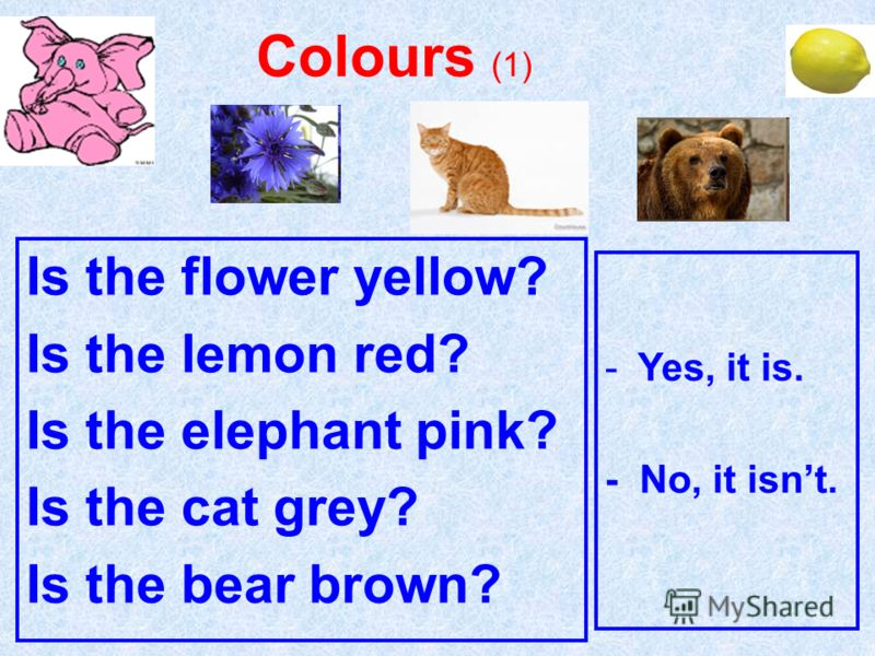Is the flower yellow? Is the lemon red? Is the elephant pink? Is the cat grey? Is the bear brown? Colours (1) -Yes, it is. - No, it isnt.
