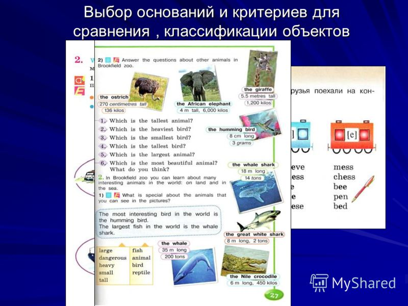 Выбор оснований и критериев для сравнения, классификации объектов