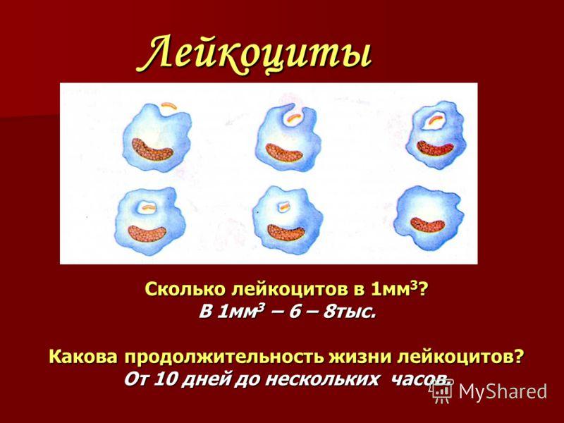 Лейкоциты Сколько лейкоцитов в 1мм 3 ? В 1мм 3 – 6 – 8тыс. Какова продолжительность жизни лейкоцитов? От 10 дней до нескольких часов.