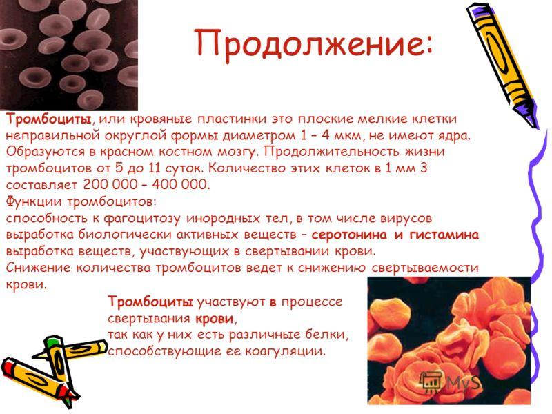 Продолжение: Тромбоциты участвуют в процессе свертывания крови, так как у них есть различные белки, способствующие ее коагуляции. Тромбоциты, или кровяные пластинки это плоские мелкие клетки неправильной округлой формы диаметром 1 – 4 мкм, не имеют я
