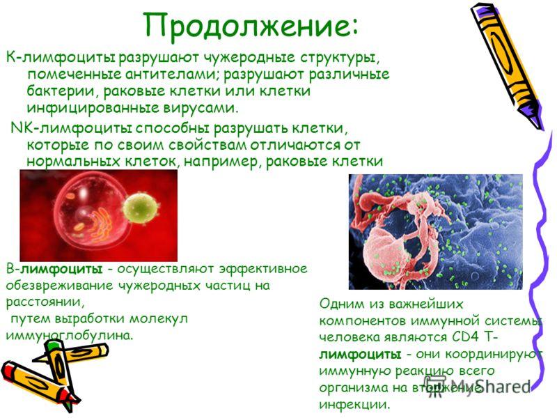 Продолжение: К-лимфоциты разрушают чужеродные структуры, помеченные антителами; разрушают различные бактерии, раковые клетки или клетки инфицированные вирусами. NK-лимфоциты способны разрушать клетки, которые по своим свойствам отличаются от нормальн