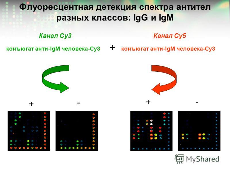 Флуоресцентная детекция спектра антител разных классов: IgG и IgM конъюгат анти-IgM человека-Сy3 + Канал Cy3Канал Сy5 + - +-