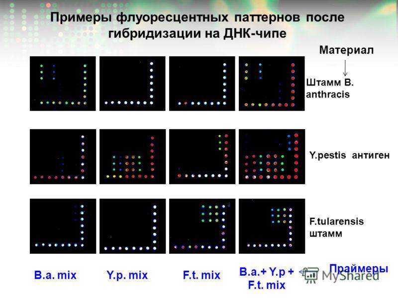 Примеры флуоресцентных паттернов после гибридизации на ДНК-чипе B.a. mix Y.p. mix F.t. mix B.a.+ Y.p + F.t. mix Штамм B. anthracis F.tularensis штамм Y.pestis антиген Праймеры Материал