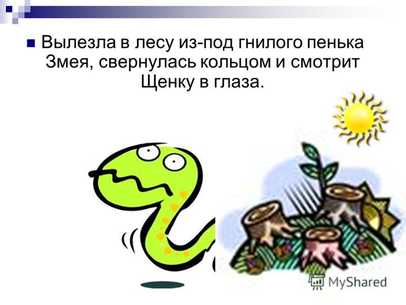Вылезла в лесу из-под гнилого пенька Змея, свернулась кольцом и смотрит Щенку в глаза.