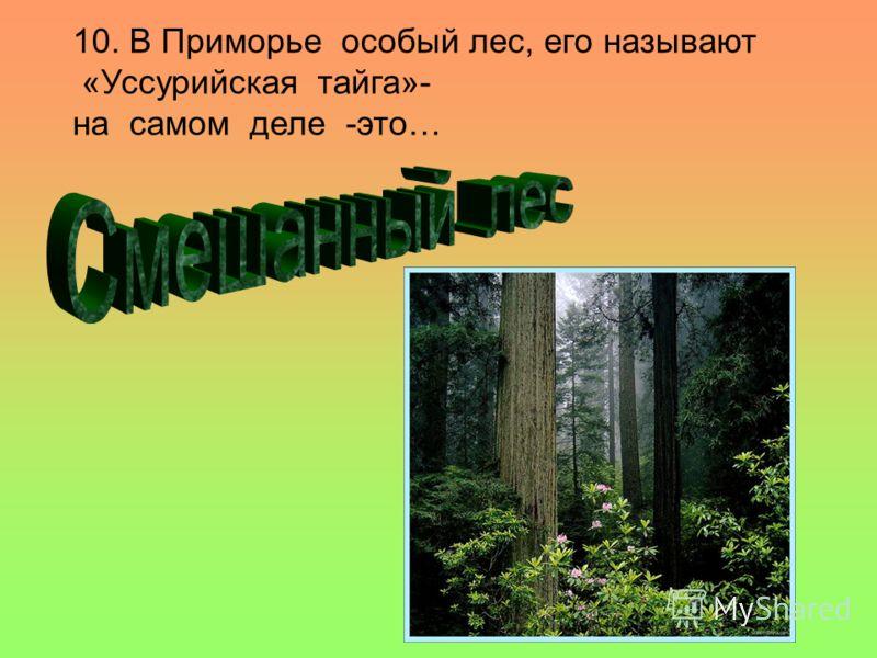 10. В Приморье особый лес, его называют «Уссурийская тайга»- на самом деле -это…