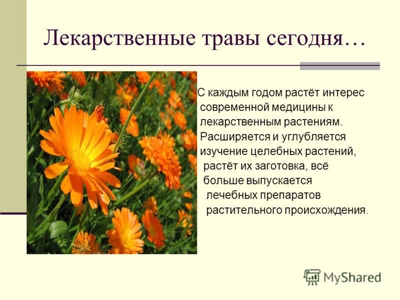 Лекарственные травы сегодня… С каждым годом растёт интерес современной медицины к лекарственным растениям. Расширяется и углубляется изучение целебных растений, растёт их заготовка, всё больше выпускается лечебных препаратов растительного происхожден
