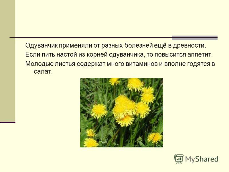 Одуванчик применяли от разных болезней ещё в древности. Если пить настой из корней одуванчика, то повысится аппетит. Молодые листья содержат много витаминов и вполне годятся в салат.
