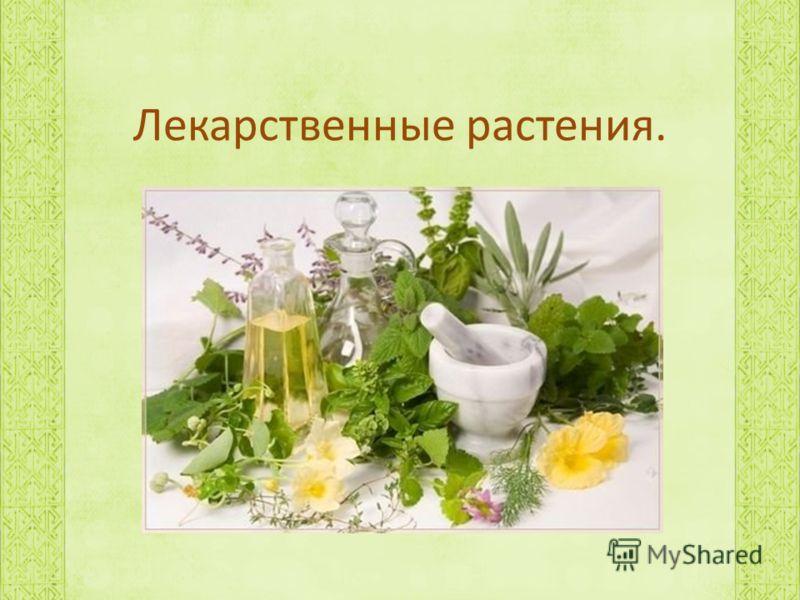Лекарственные растения.