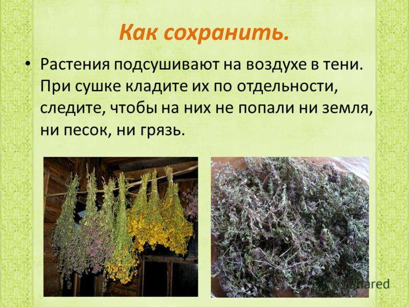 Как сохранить. Растения подсушивают на воздухе в тени. При сушке кладите их по отдельности, следите, чтобы на них не попали ни земля, ни песок, ни грязь.