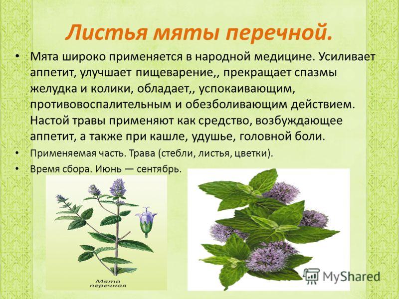 Листья мяты перечной. Мята широко применяется в народной медицине. Усиливает аппетит, улучшает пищеварение,, прекращает спазмы желудка и колики, обладает,, успокаивающим, противовоспалительным и обезболивающим действием. Настой травы применяют как ср