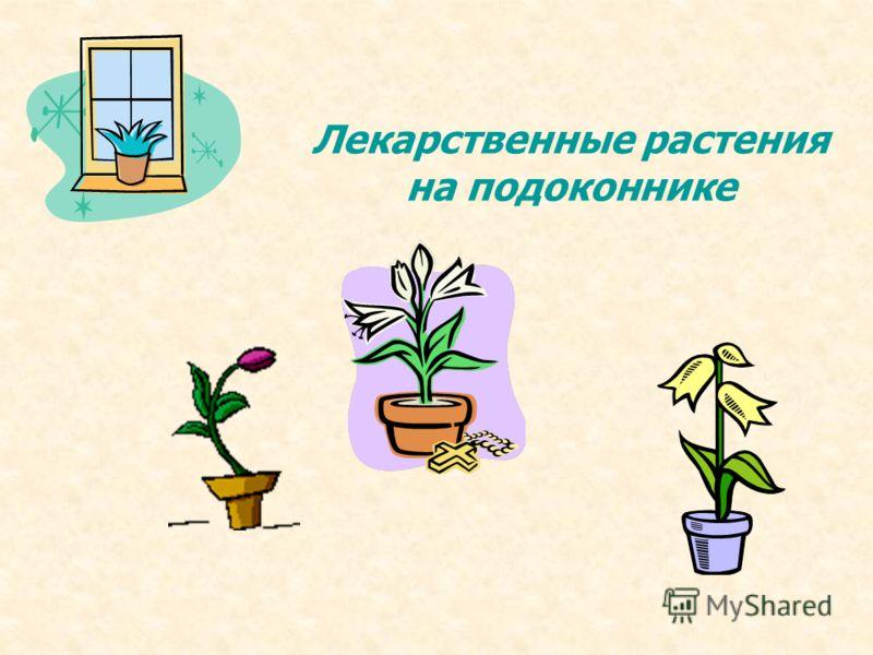Лекарственные растения на подоконнике