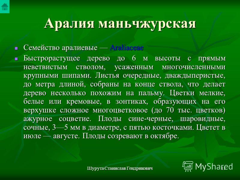 Шурута Станислав Гендрикович10 Аралия маньчжурская Aralia mandshurica Rupr. et Maxim. Рис