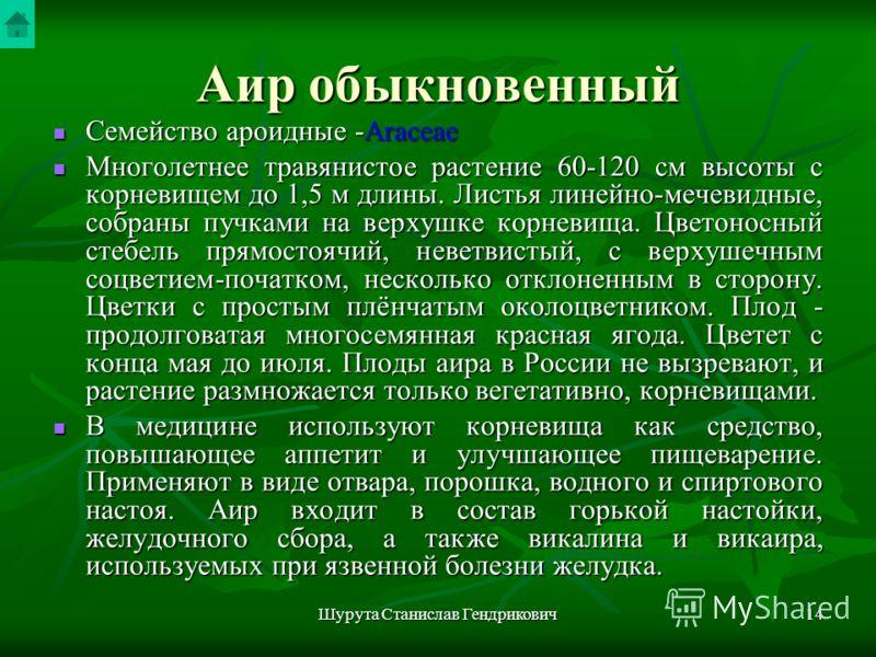 Шурута Станислав Гендрикович13 Аир обыкновенный Acorus calamus L. Рис