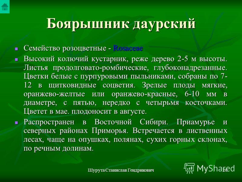Шурута Станислав Гендрикович19 Боярышник даурский Crataegus dahurica Koehne ex Schneid
