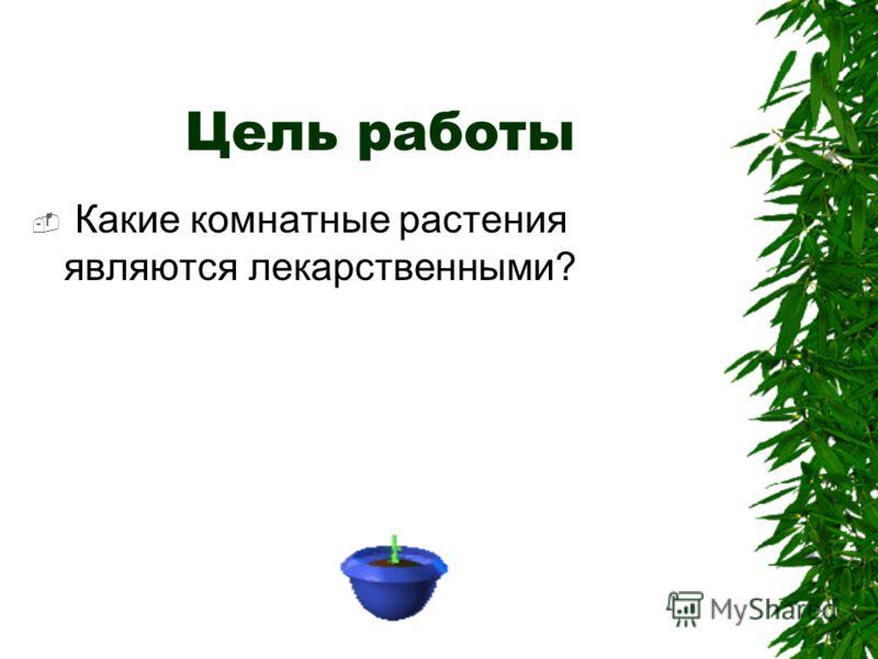 Цель работы Какие комнатные растения являются лекарственными?