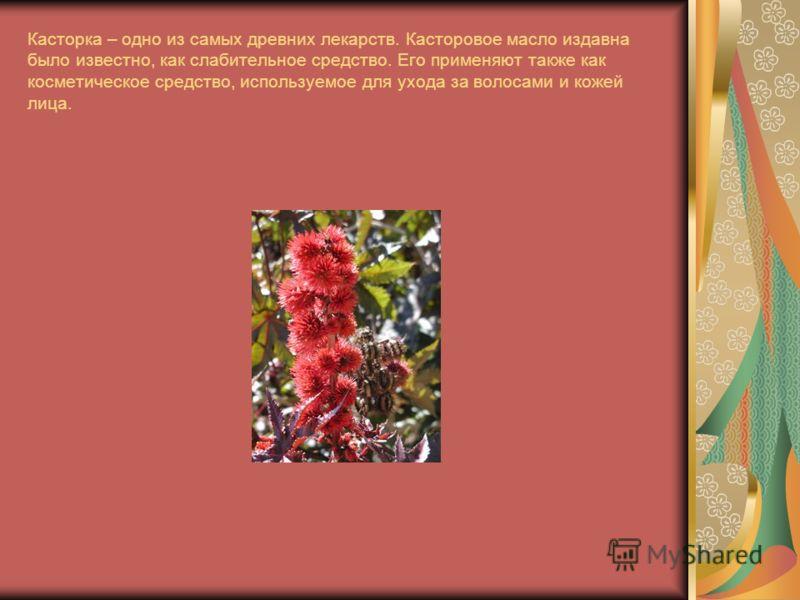 Касторка – одно из самых древних лекарств. Касторовое масло издавна было известно, как слабительное средство. Его применяют также как косметическое средство, используемое для ухода за волосами и кожей лица.