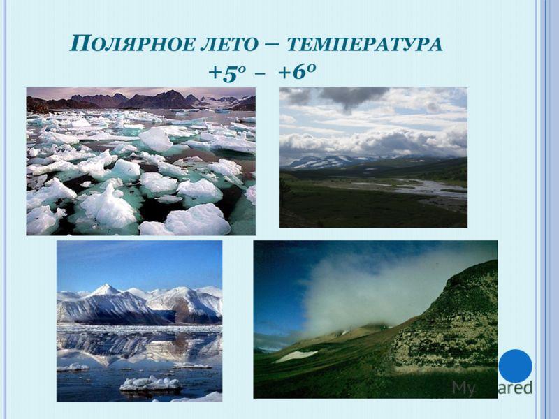 П ОЛЯРНОЕ ЛЕТО – ТЕМПЕРАТУРА +5 0 _ +6 0