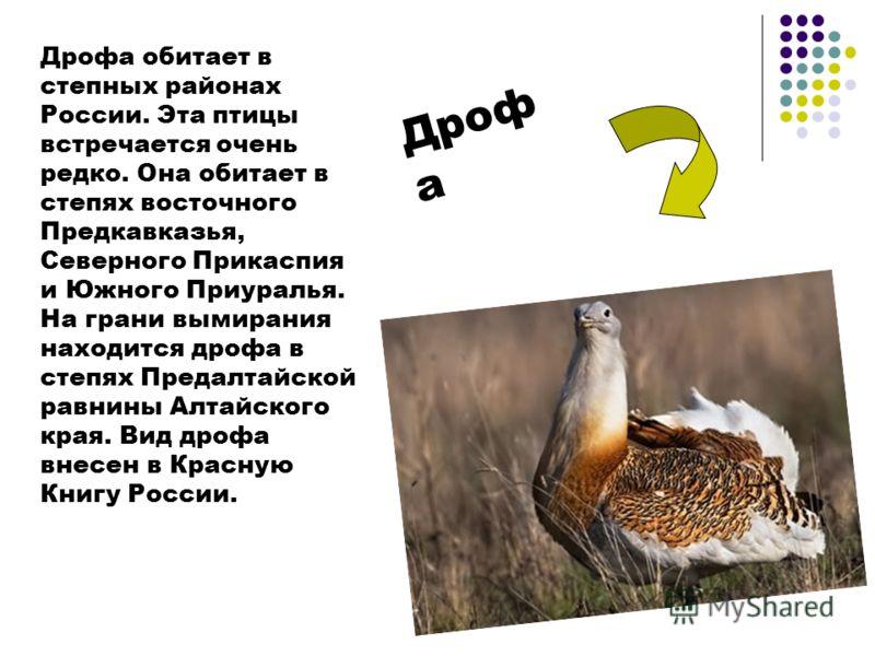 Дрофа обитает в степных районах России. Эта птицы встречается очень редко. Она обитает в степях восточного Предкавказья, Северного Прикаспия и Южного Приуралья. На грани вымирания находится дрофа в степях Предалтайской равнины Алтайского края. Вид др