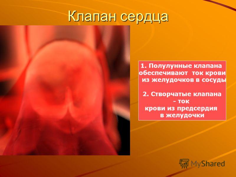 Клапан сердца 1. Полулунные клапана обеспечивают ток крови из желудочков в сосуды 2. Створчатые клапана - ток крови из предсердия в желудочки