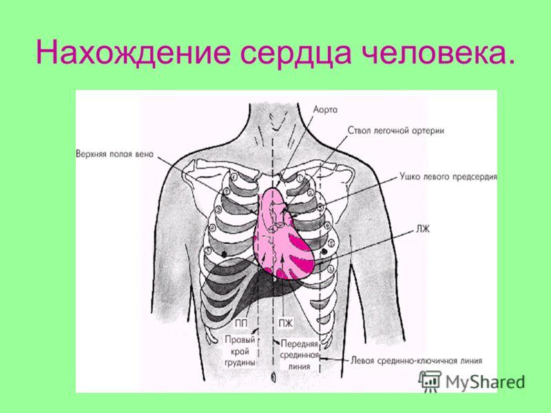 Нахождение сердца человека.