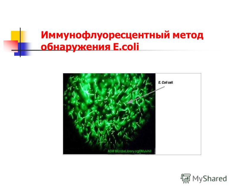 Иммунофлуоресцентный метод обнаружения E.coli