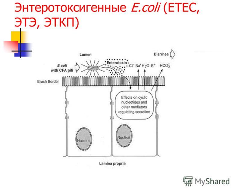 Энтеротоксигенные E.coli (ETEC, ЭТЭ, ЭТКП)