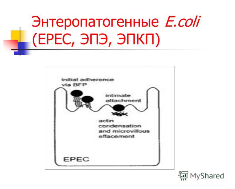 Энтеропатогенные E.coli (EPEC, ЭПЭ, ЭПКП)