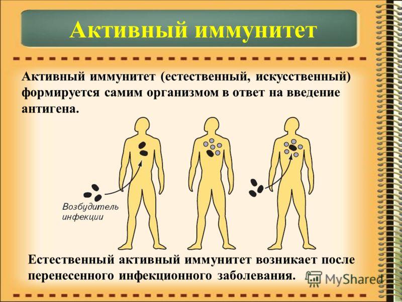 Активный иммунитет Активный иммунитет (естественный, искусственный) формируется самим организмом в ответ на введение антигена. Естественный активный иммунитет возникает после перенесенного инфекционного заболевания.