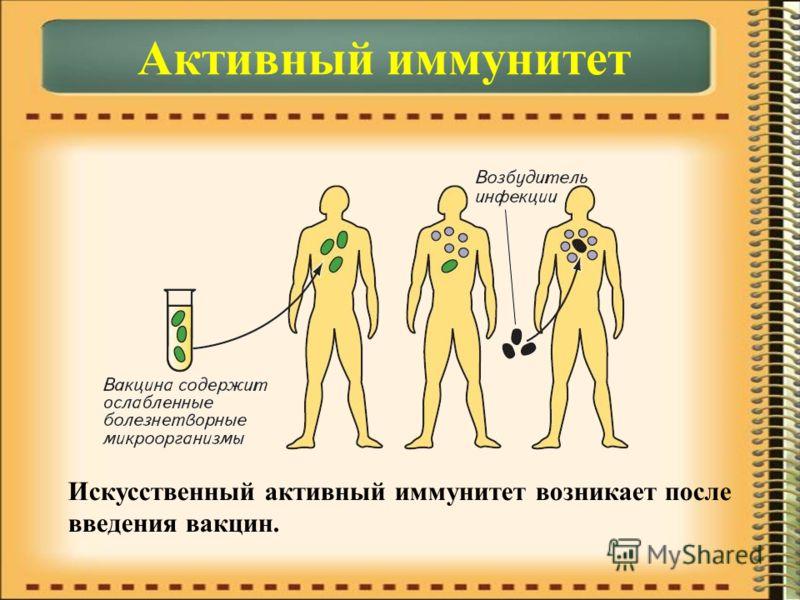 Искусственный активный иммунитет возникает после введения вакцин.