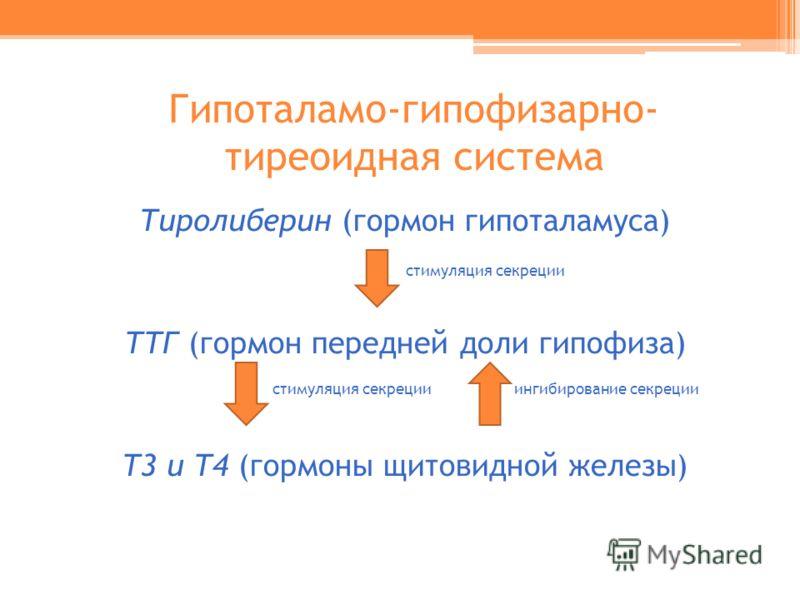 Гипоталамо-гипофизарно- тиреоидная система Тиролиберин (гормон гипоталамуса) стимуляция секреции ТТГ (гормон передней доли гипофиза) стимуляция секреции ингибирование секреции Т3 и Т4 (гормоны щитовидной железы)