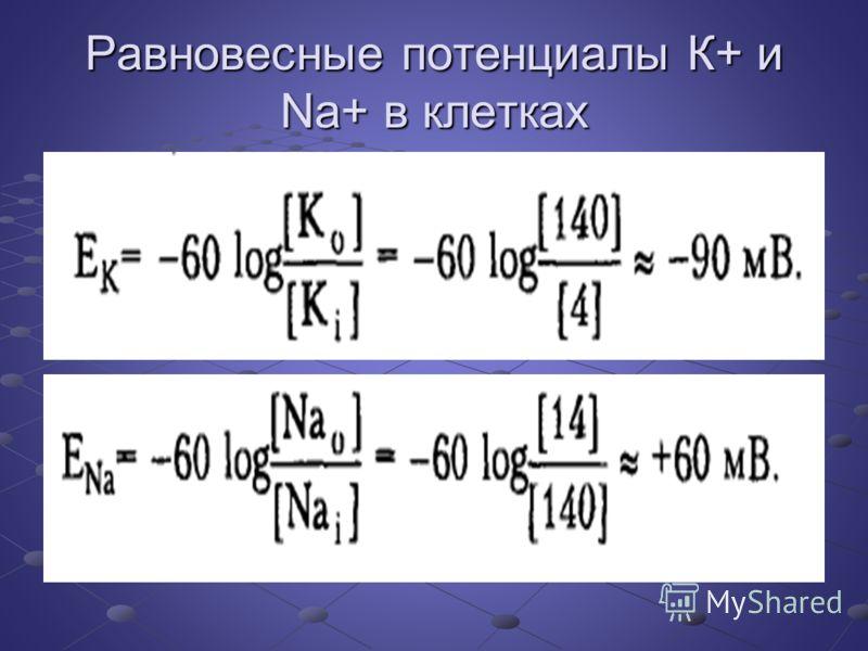 Равновесные потенциалы К+ и Na+ в клетках