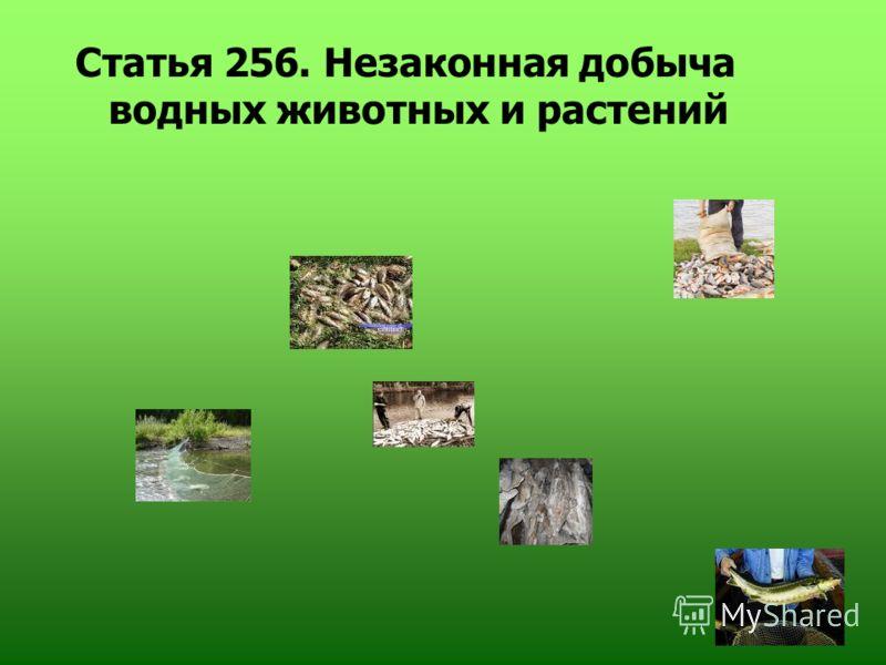 Статья 256. Незаконная добыча водных животных и растений