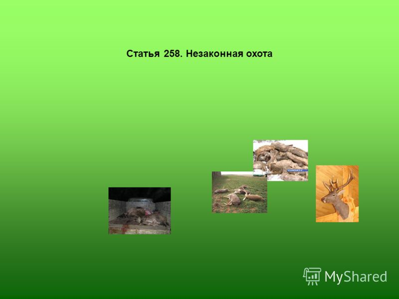 Статья 258. Незаконная охота