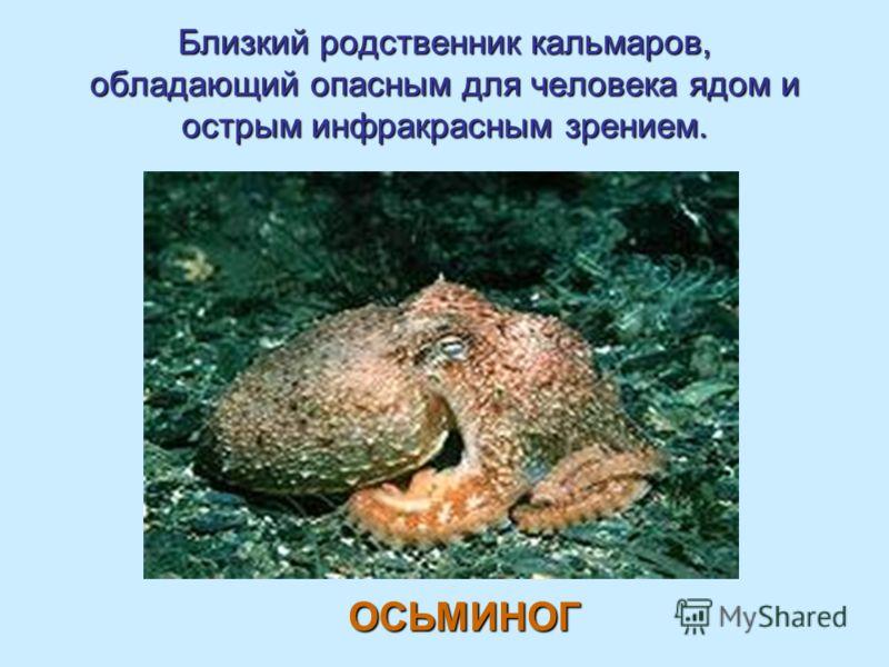 Близкий родственник кальмаров, обладающий опасным для человека ядом и острым инфракрасным зрением. ОСЬМИНОГ