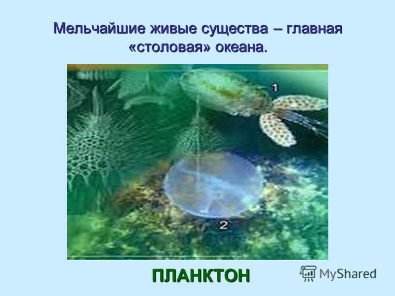 Мельчайшие живые существа – главная «столовая» океана. ПЛАНКТОН