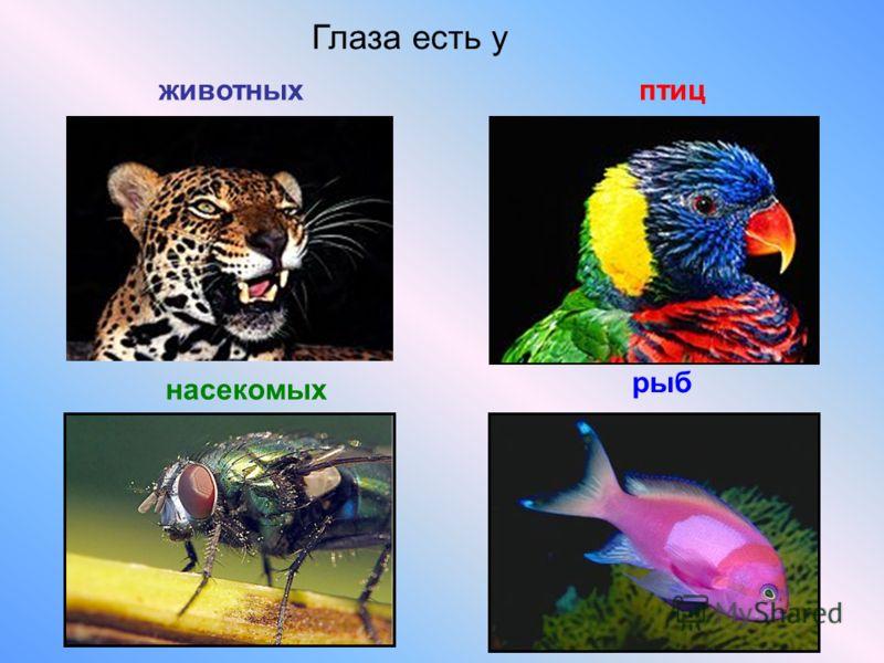 Презентация на тему мир глазами животных