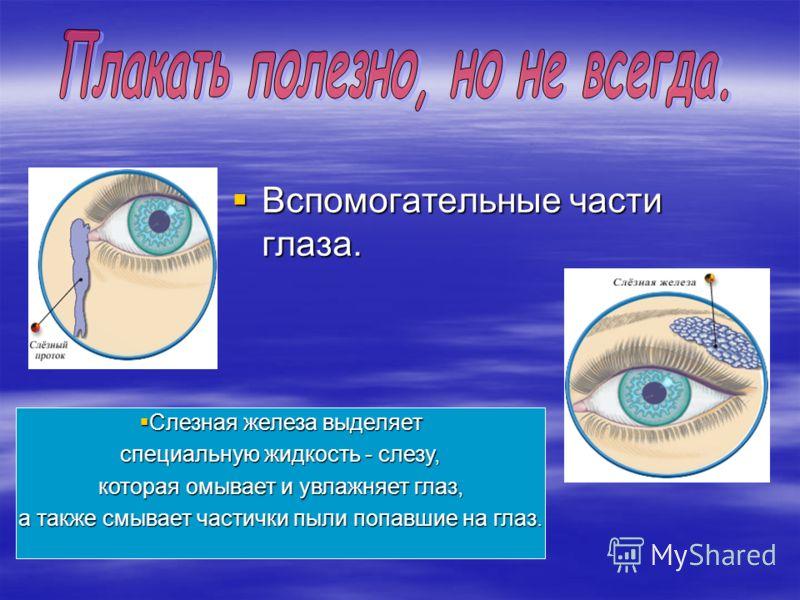Вспомогательные части глаза. Вспомогательные части глаза. Слезная железа выделяет Слезная железа выделяет специальную жидкость - слезу, которая омывает и увлажняет глаз, которая омывает и увлажняет глаз, а также смывает частички пыли попавшие на глаз