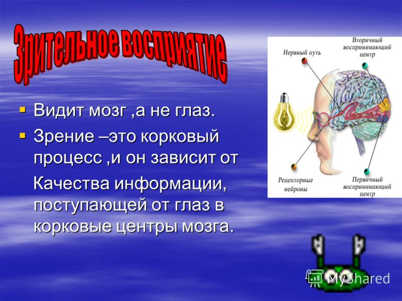 Видит мозг,а не глаз. Зрение –это корковый процесс,и он зависит от Качества информации, поступающей от глаз в корковые центры мозга.