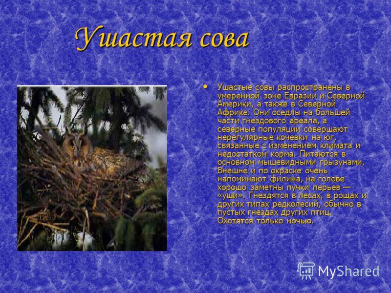 Ушастая сова Ушастая сова Ушастые совы распространены в умеренной зоне Евразии и Северной Америки, а также в Северной Африке. Они оседлы на большей части гнездового ареала, а северные популяции совершают нерегулярные кочевки на юг, связанные с измене