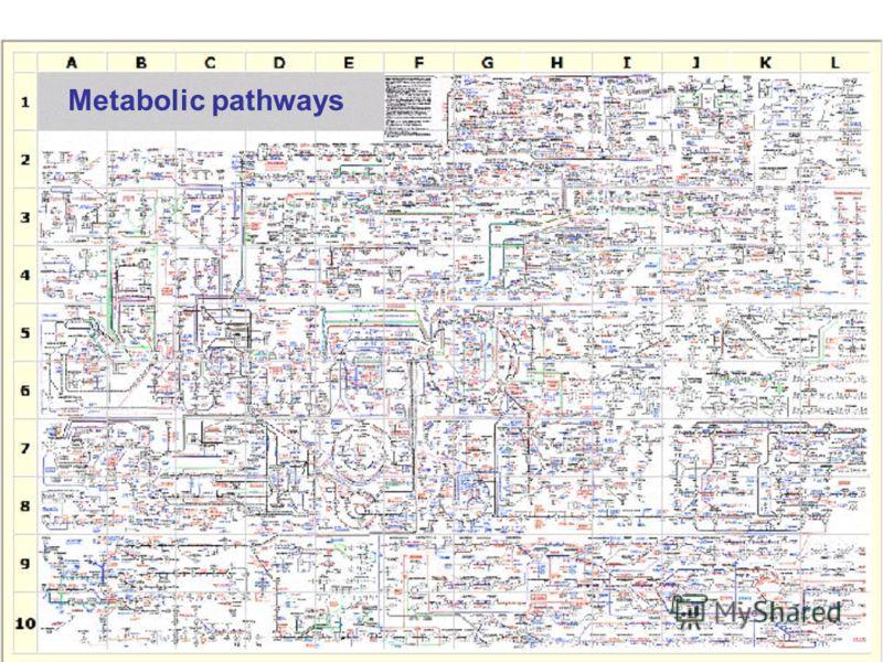 Metabolic pathways