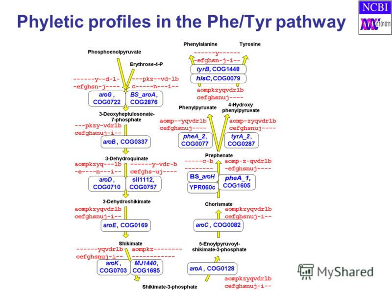 Phyletic profiles in the Phe/Tyr pathway
