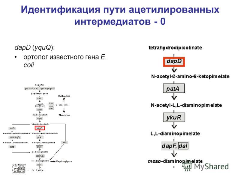 Идентификация пути ацетилированных интермедиатов - 0 dapD (yquQ): ортолог известного гена E. coli