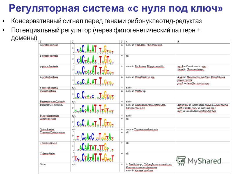 Регуляторная система «с нуля под ключ» Консервативный сигнал перед генами рибонуклеотид-редуктаз Потенциальный регулятор (через филогенетический паттерн + домены)