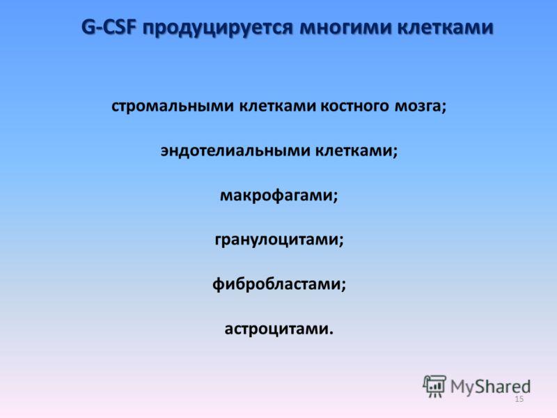 G-CSF продуцируется многими клетками стромальными клетками костного мозга; эндотелиальными клетками; макрофагами; гранулоцитами; фибробластами; астроцитами. 15