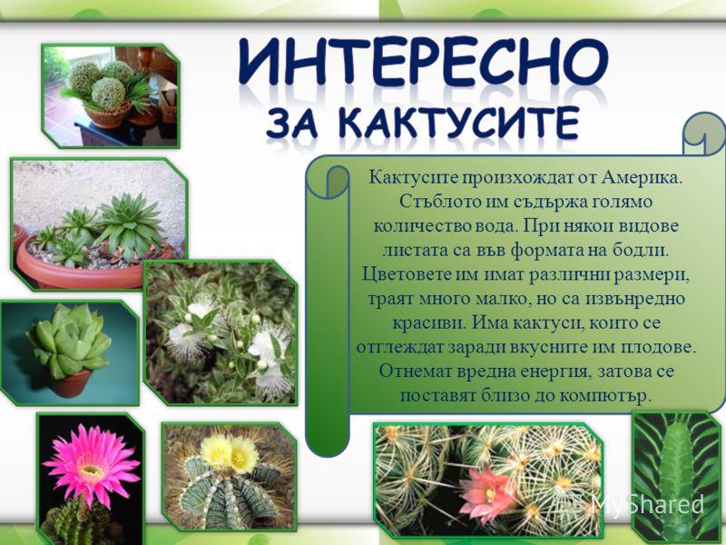Кактусите произхождат от Америка. Стъблото им съдържа голямо количество вода. При някои видове листата са във формата на бодли. Цветовете им имат разл