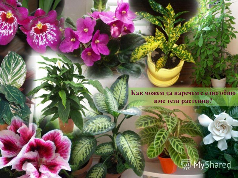 Как можем да наречем с едно общо име тези <a href='http://www.myshared.ru/theme/prezentatsiya-rasteniya/' title='растения'>растения</a>?