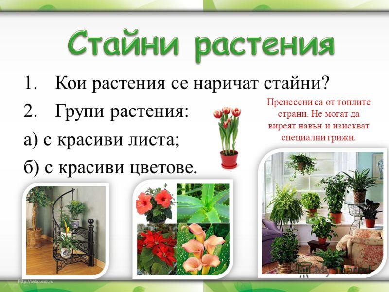 1.Кои растения се наричат стайни? 2.Групи растения: а) с красиви листа; б) с красиви цветове. Пренесени са от топлите страни. Не могат да виреят навън и изискват специални грижи.