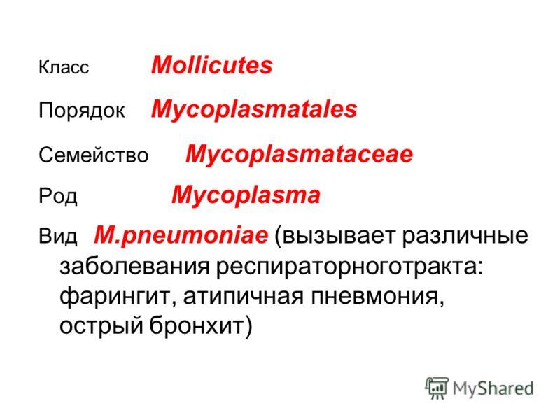 Класс Mollicutes Порядок Mycoplasmatales Семейство Mycoplasmataceae Род Mycoplasma Вид M.pneumoniae (вызывает различные заболевания респираторноготракта: фарингит, атипичная пневмония, острый бронхит)