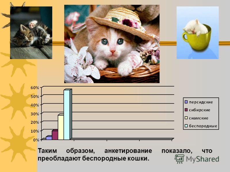 Таким образом, анкетирование показало, что преобладают беспородные кошки.