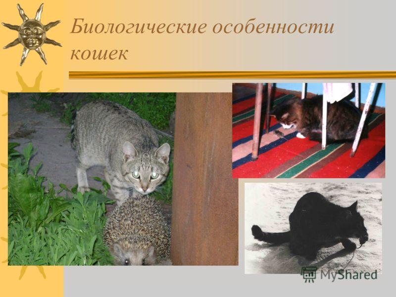 Биологические особенности кошек
